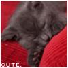 Темный котенок.